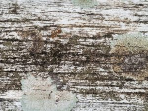 water damage mold, dry rot, staining a deck