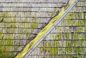 new roof, algae on roof, moss on roof, install new roof