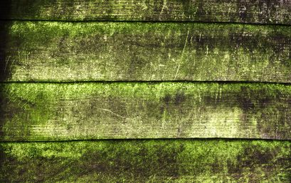 prevent mold. mold on deck. how to clean mold on deck