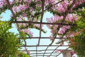 pergola designs, branch pergola, rustic pergola, rustic outdoor living