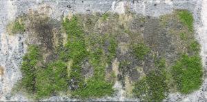 Moss and Algae on concrete